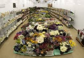 potomac fl whole 2403 linden ln silver spring md florists supplies manufacturers mapquest
