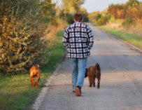 Acepromazine For Dogs Dosage Side Effects Anxiety