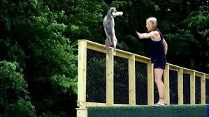Weltrekord Hund Springt Fast Elf Meter Weit