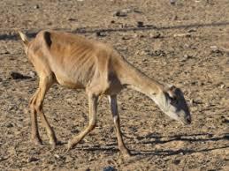 Resultado de imagem para desertificação