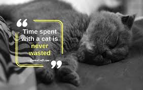 Spend Time With Cat Quotes About Cats About Cat Cat Quotes Quotescraft
