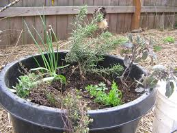 Tips For Planting A Container Herb GardenContainer Herb Garden Plans
