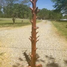Cedar Coat Rack Best One Of A Kind Cedar Tree Coat Rack Approx 10000 100100' Tall for sale 14