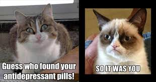 """The Best Of """"Angry Cat"""" - 15 Pics via Relatably.com"""