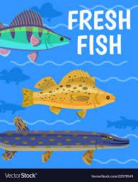 Aquarium Background Pictures Fish On Aquarium Background Royalty Free Vector Image
