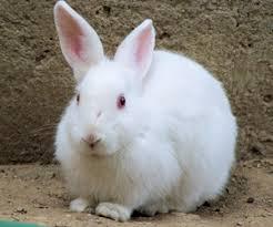 petsmart animals bunny. Fine Petsmart Rabbit Intended Petsmart Animals Bunny