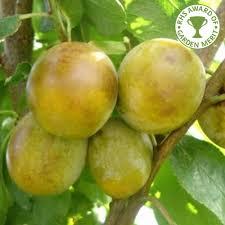 742 Best FRUITS Images On Pinterest  Fruit Trees Exotic Fruit Plum Fruit Tree Varieties