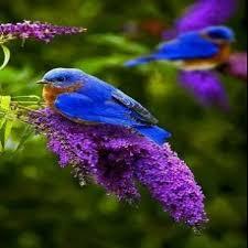 Resultado de imagem para naturaleza hermosa