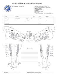 Fillable Online 176 32 230 Beva Dental Chart For Evdc