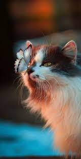 Cute Kawai Cat HD Wallpaper (Page 1 ...