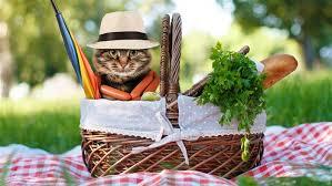 Billedresultat for picnic