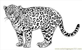 Small Picture Lion Tiger Coloring Page 26 Coloring Page Free Jaguar Coloring