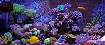 Captivating Optimale Beleuchtung Im Aquarium Unterstützt Die Bunte Farbenwelt.