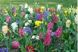 spring flowers free stock photo