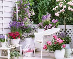 Small Picture Small Rose Garden Growing Roses in Containers Balcony Patio