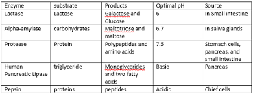 Enzyme Chart The Purpose Of Enzymes In Digestion Brain Damage Anorexia