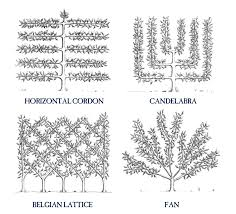 How To Espalier Fruit Trees  Stark Brou0027sWhen Do You Plant Fruit Trees