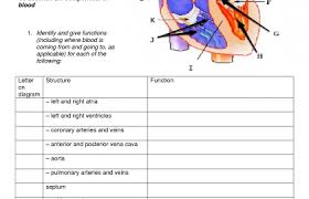 parts and functions of the circulatory system  circulatory system essay parts and functions of the circulatory system