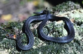 Black Snake With Diamond Pattern Cool Decorating Ideas