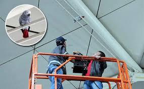 Image result for havalimanında kaçak papağan operasyonu