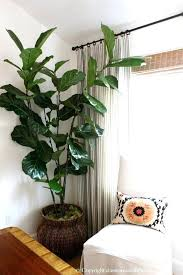 appealing large indoor plant 109 large indoor plant pots melbourne appealing large indoor plant 109 large