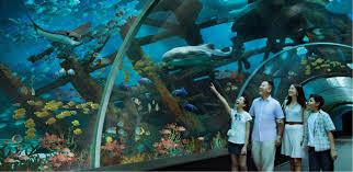 s e a aquarium shipwreck tunnel