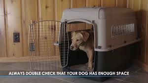 Pet Porter Size Chart How To Properly Size A Kennel Or Crate For Your Dog