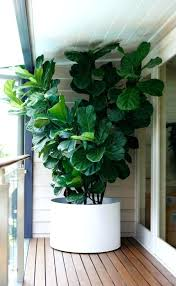 indoor flower pots large indoor planters 2 small indoor plant pots uk indoor flower pots indoor plant