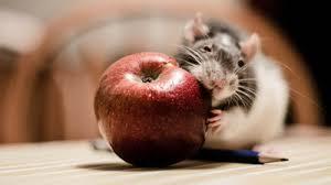 ネズミ 29
