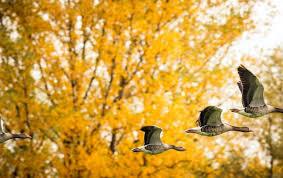 Картинки по запросу картинки осень природа