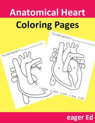 Small Picture Printable Human Anatomy Coloring Pages Bing Images Wow Click