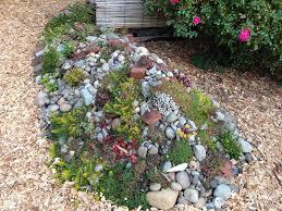 succulent rock garden by arthaey succulent rock garden by arthaey