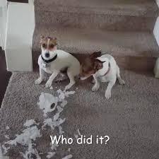 <b>Nero Gold</b> Petfood Nederland - Onschuldige hondjes? | Facebook