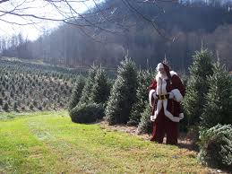 Christmas Tree Farms Near Me Photo Album - Home Design Ideas. Christmas  Tree Farms Near