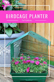 planting flowers in a birdcage is a quick and easy diy gardening project this birdcage planter was repurposed from a parakeet cage found at a thrift