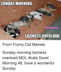 cats funny and memes sunday morning funnycatmemes xyz laziness overload from funny