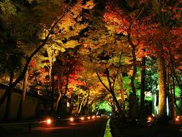 landscape lighting trees. Via Pond And Fountain World Landscape Lighting Trees H