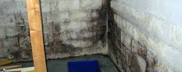 how to get rid of mold in basement top getting with mold on basement walls cinder how to get rid