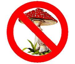 """Реферат на тему """"Отруєння грибами"""" Учениці б класу Машовець  Отруєння грибами"""