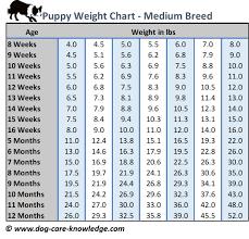 Boxer Puppy Growth Chart Boxer Dogs Size Chart Goldenacresdogs Com