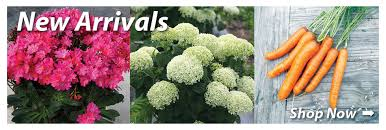 garden seed companies. Garden Seed | Vegetable Catalog Company Jung And Flower Companies