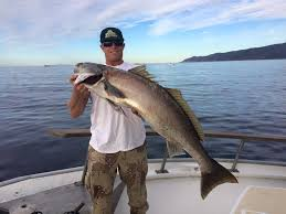 Types Of Bass Fish Chart Fish Types Fish Species Channel Islands Fishing