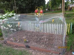 how to keep squirrels out of garden. Can You Tell I\u0027m On A Mission To Keep Squirrels Out?? How Out Of Garden