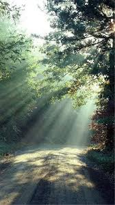 Nature Forest Sunlight Trees Road ...