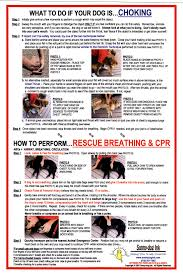 Diabetes First Aid Infant First Aid For Choking And Cpr