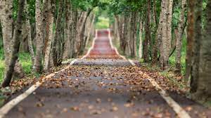 Jungle tree lined road-Nature High ...