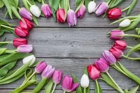 Tulipe - Signification Des Fleurs