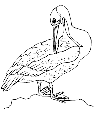 Small Picture Big Bird Coloring Pages To Print Coloring Home