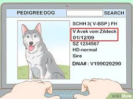 3 Ways To Read A Dogs Pedigree Wikihow