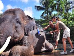 full size of home insurance home construction insurance american home insurance elephant insurance customer service